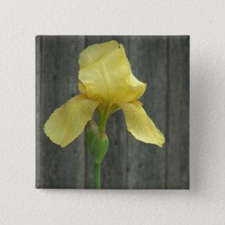 Yellow Bearded Iris at Worn Down Fence Pinback Button