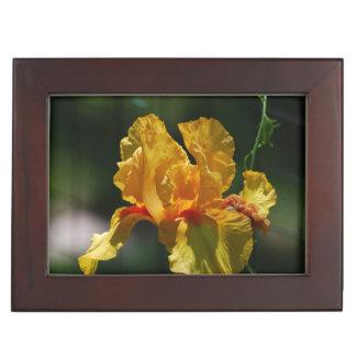 Yellow Bearded Iris Memory Box