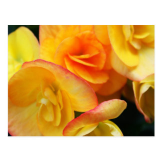 Yellow begonia post card