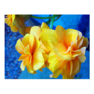 Yellow Begonias Post Cards