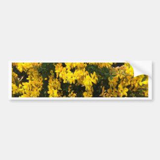 Yellow  Bell flowers -- Native Australian Bumper Sticker