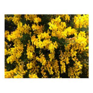 Australian native flower postcards zazzle yellow bell flowers native australian postcard mightylinksfo