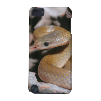 Yellow Bellied House Snake (Lamprophis Fuscus) iPod Touch (5th Generation) Case