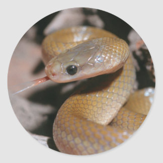 Yellow Bellied House Snake (Lamprophis Fuscus) Classic Round Sticker