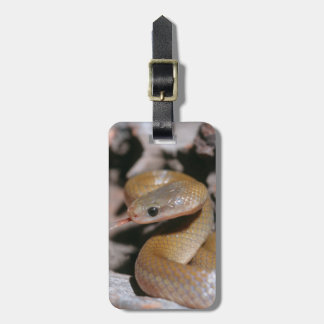 Yellow Bellied House Snake (Lamprophis Fuscus) Luggage Tag