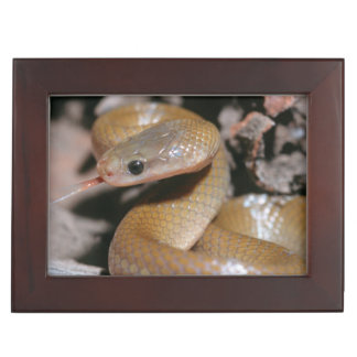 Yellow Bellied House Snake (Lamprophis Fuscus) Memory Box