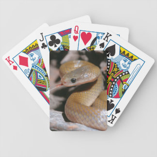 Yellow Bellied House Snake (Lamprophis Fuscus) Bicycle Card Decks