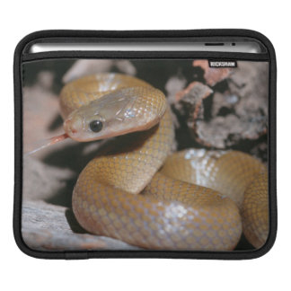 Yellow Bellied House Snake (Lamprophis Fuscus) Sleeve For iPads