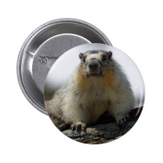 Yellow Bellied Marmot Pins