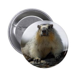 Yellow Bellied Marmot Pinback Button