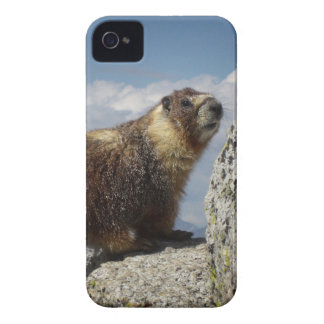 Yellow Bellied Marmot in Yosemite iPhone 4 Cover