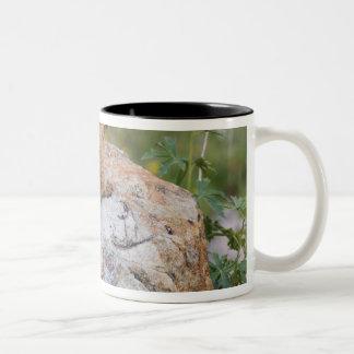 Yellow-bellied Marmot, Marmota flaviventris, Coffee Mugs