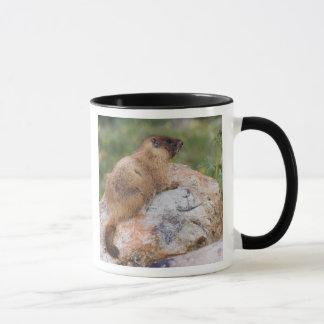 Yellow-bellied Marmot, Marmota flaviventris, Mug