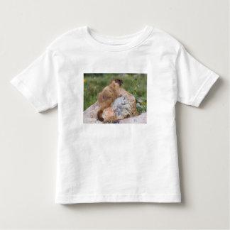 Yellow-bellied Marmot, Marmota flaviventris, Shirt