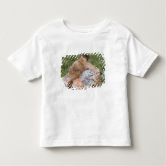 Yellow-bellied Marmot, Marmota flaviventris, T-shirt