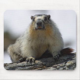 Yellow Bellied Marmot Mouse Pads