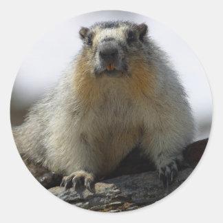 Yellow Bellied Marmot Round Stickers