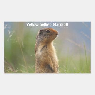 Yellow-bellied Marmot Wildlife Photo Sticker