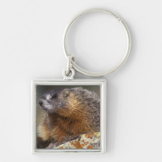 Yellow-bellied Marmot, Yellowstone NP, WY, USA Keychain