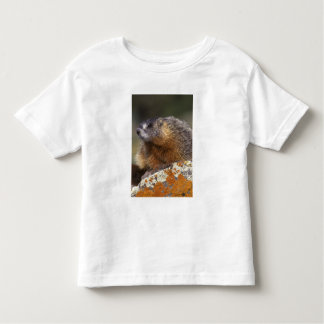 Yellow-bellied Marmot, Yellowstone NP, WY, USA Shirt