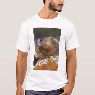 Yellow-bellied Marmot, Yellowstone NP, WY, USA T-Shirt