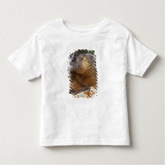 Yellow-bellied Marmot, Yellowstone NP, WY, USA T Shirt