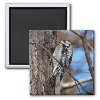 Yellow-Bellied Sapsucker Magnet