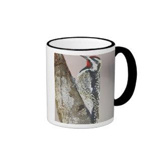 Yellow-bellied Sapsucker male feeding on sap Ringer Coffee Mug