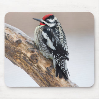 Yellow-bellied Sapsucker male Mouse Pad