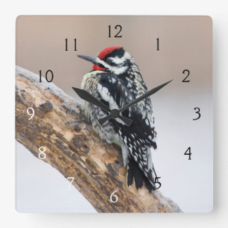 Yellow-bellied Sapsucker male Square Wall Clock