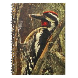 Yellow-bellied Sapsucker Notebook