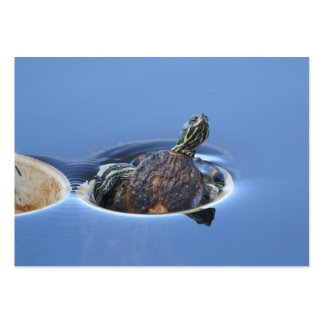 Yellow Bellied Slider Large Business Cards (Pack Of 100)