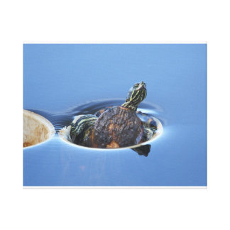 Yellow Bellied Slider Canvas Print