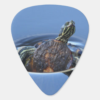 Yellow Bellied Slider Guitar Pick