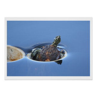 Yellow Bellied Slider Poster