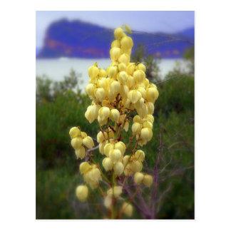 yellow bells postcard