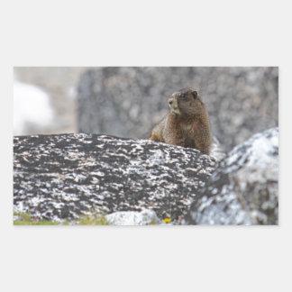 Yellow Belly Marmot Rectangular Sticker