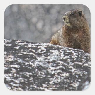 Yellow Belly Marmot Square Sticker