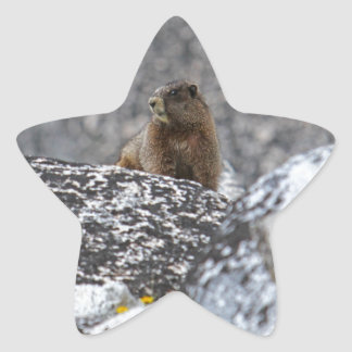 Yellow Belly Marmot Stickers