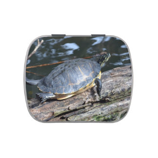 yellow belly slider sunning self on log candy tin
