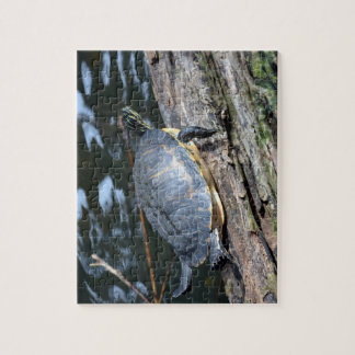 yellow belly slider sunning self on log jigsaw puzzle