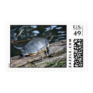 yellow belly slider sunning self on log postage stamps
