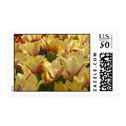Yellow Bi-Color Tulips Postage Stamps
