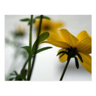 Yellow Biddens - 3 - Floral Photography Postcard