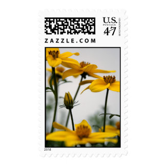 Yellow Bidens 1- Floral Photography Postage