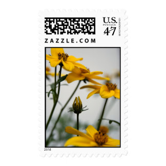 Yellow Bidens 2-  Floral Photography Postage