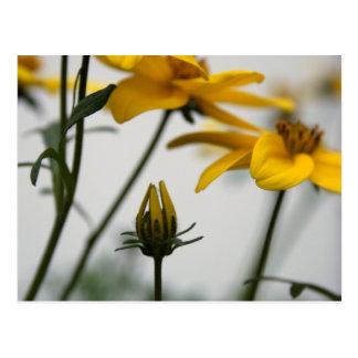 Yellow Bidens 2 Floral Photography Summer Postcard