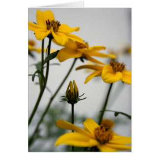 Yellow Bidens - Floral Photography Card
