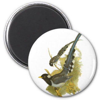Yellow-billed Blue Magpie 2 Inch Round Magnet