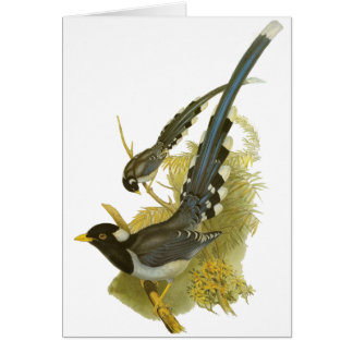 Yellow-billed Blue Magpie Card